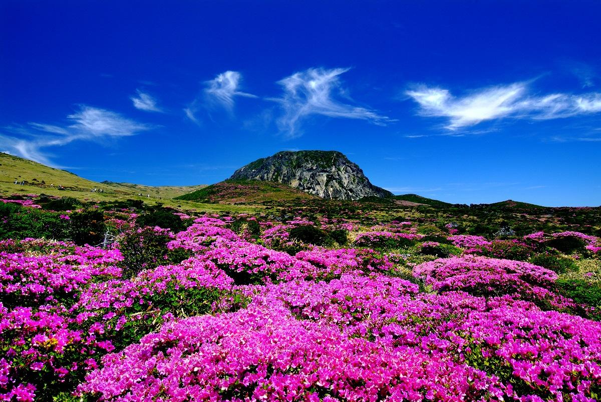 Khám phá ngọn núi thiêng Hallasan trên đảo JeJu