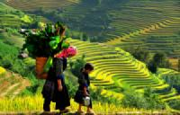 SAPA EASY TREK 2D/3N (TRAIN - HOMESTAY)